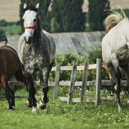 Atelier Foto Equus Spirit cu Mihai Moiceanu 2016