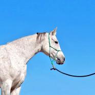 (English) (Română) Calul, un prieten, prin dresajul natural